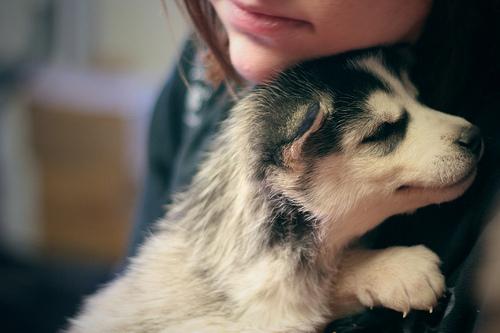 صورة صور كلاب صغيرة