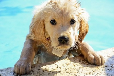 كلاب صغيرة  كلاب كيوت كلاب 84983.imgcache