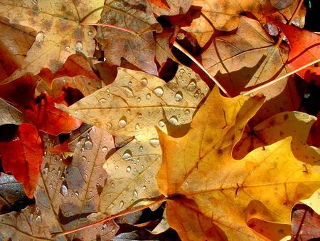 صورة موضوع تعبير عن فصل الخريف
