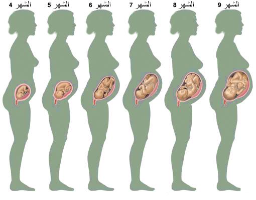بالصور متى يكتمل الجنين في بطن امه 20160630 153