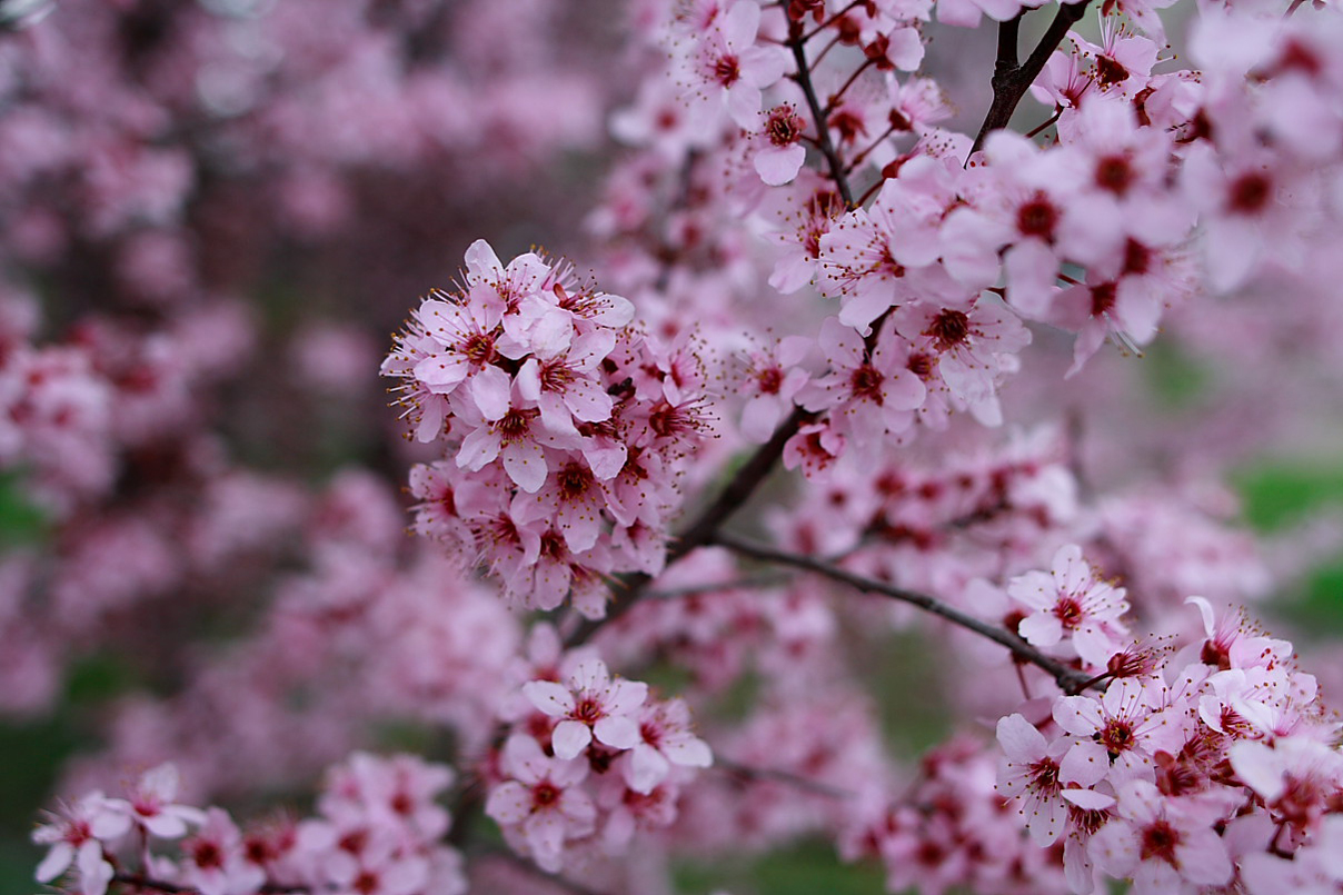 صور موضوع تعبير عن فصل الربيع