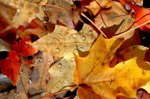صور موضوع تعبير عن فصل الخريف