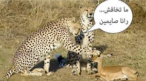 صور جزائرية مضحكة , نكت جزائرية مضحكة