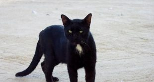 صورة صور قطط نونو حلوه
