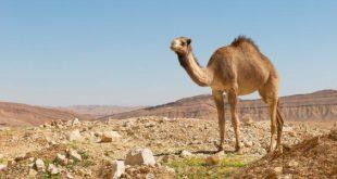 صور تفسير الصحراء في الحلم الصحراء بالمنام