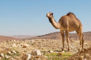صوره تفسير الصحراء في الحلم الصحراء بالمنام