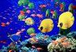 صور موضوع عن عالم البحار