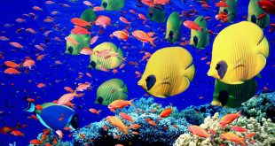 موضوع عن عالم البحار