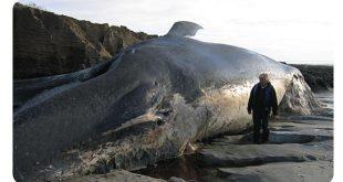 ماهو اكبر حيوان في العالم