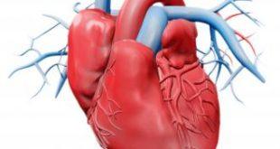 صورة تقوية عضلة القلب بالاعشاب