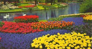 موضوع فصل الربيع