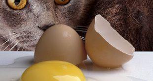 صور هل البيض يعمل امساك