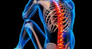 صورة اين توجد عظمة الركاب في جسم الانسان
