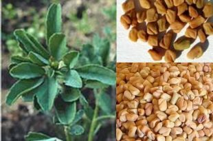 صور النباتات التي تسبب اسهال