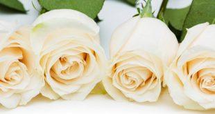 صور ساحرة لانواع الزهور