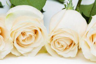 صور صور ساحرة لانواع الزهور