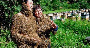 صوره كتاب النحل ابو فراس