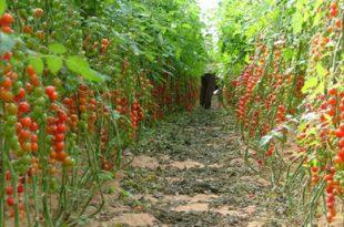 صور الزراعة التجارية مصطلح