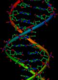 صوره مقر العوامل الوراثية 1 ثانوي