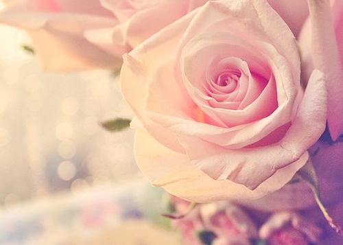 صوره كلمات شعر عن الورد كلام في الورود وجمالها