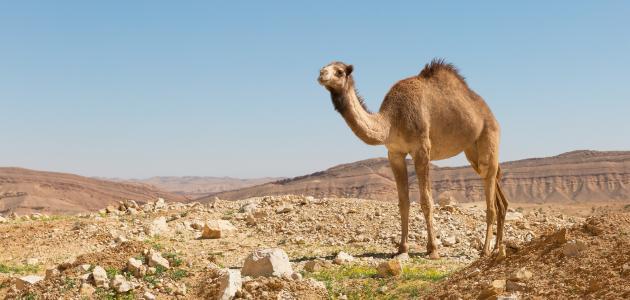 صورة تفسير الصحراء في الحلم الصحراء بالمنام