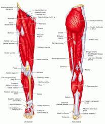 صورة كم يبلغ عدد العضلات في الجسم , تعرف على عدد عضلات جسم الانسان