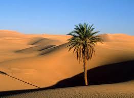 بالصور موضوع تعبير عن تعمير الصحراء 20160712 15