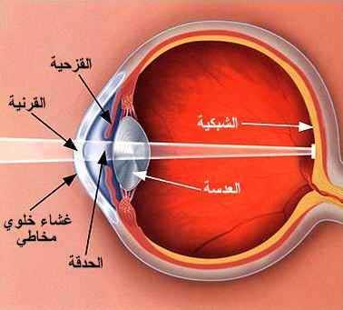 بالصور سبب غباش العين واحدة من العيون 20160715 305