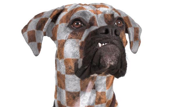 صور انواع الكلاب