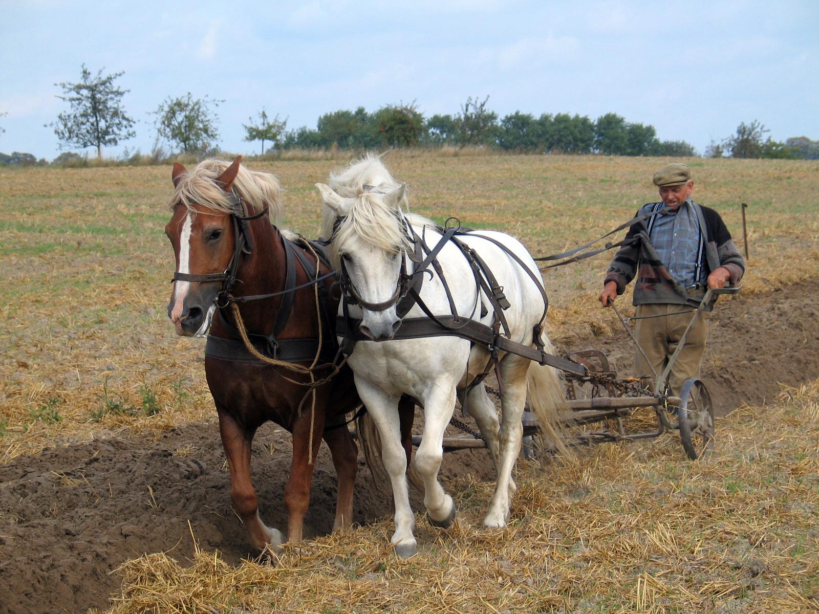 صور تعريف مهنة المزارع ، اهمية الزراعة