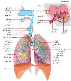 صوره مقال علمي عن الجهاز التنفسي