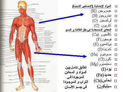 صورة كم عدد اعضاء جسم الانسان