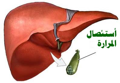 صورة ما دور المرارة في جسم الانسان