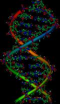 صور مقر العوامل الوراثية 1 ثانوي