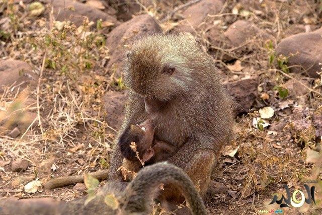 معلومات الحيوانات 2017 معلومات الحيوانات بالصور معلومات الحيوانات نادرة وغريبة