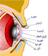 صور من اول من شرح كتاب تركيب العين,اعرف من هو