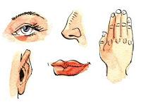 صور عرض عن الحواس الخمس , تعرف على الحواس الخمس