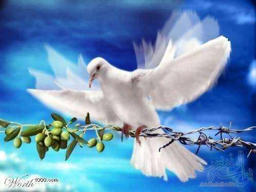 صور امثال حول السلام