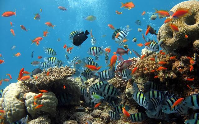 صورة صور اسماك جميلة , اجمل اشكال للاسماك