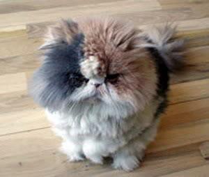 صورة صور قطط جميلة