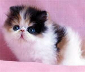 صور صور قطط جميلة