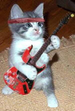 صور قطط رائعة 22.jpg