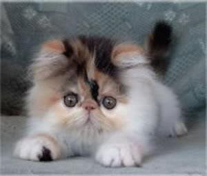 صور قطط رائعة blootr11.jpg