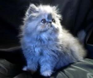 صور قطط جميلة fdukk.jpg