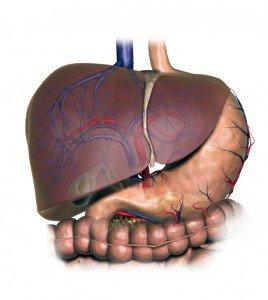 صور مشاكل الكبد واعراضها