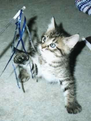 صور قطط جميلة G00412.jpg