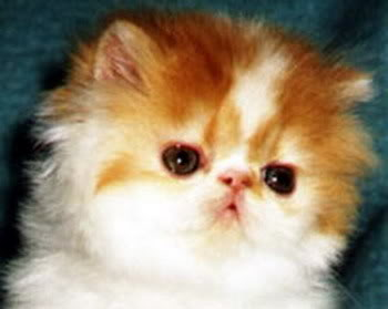 صور قطط جميلة aecgs.jpg