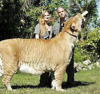 صورة ضخم حيوان في العالم