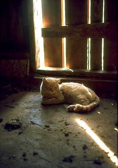 صور قطط جميلة Kitty.jpg