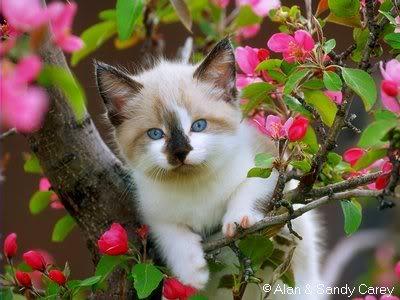 صور قطط رائعة 80bf1a1e53.jpg